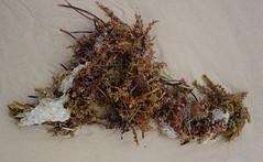 Tangled Seaweeds