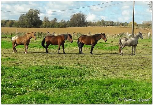 Quand tes chevaux sont fans des Beatles...