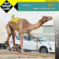 صور سباق الحيل والزمول (الأشواط العامة) المحلي الثالث صباح  19-10-2019