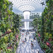 The world's tallest indoor waterfall - The Jewel Changi Airport (Singapore)