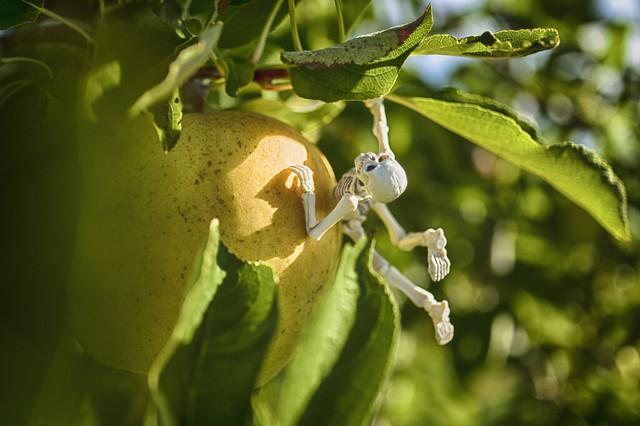 Applehappy