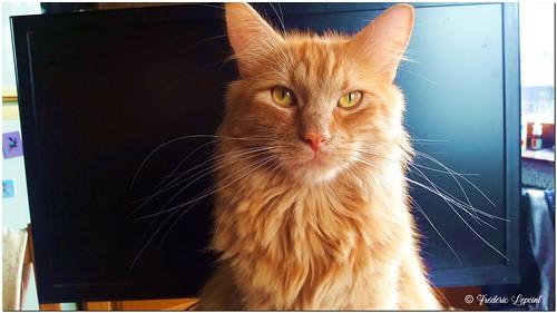 Sully, devant la télé...