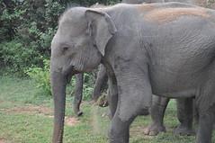 Sri Lanka 2011