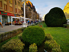 TIMISOARA CITY CENTER PLANTS