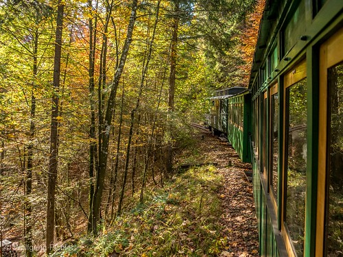 Through the autumn forest
