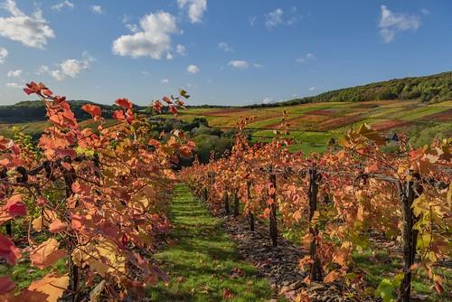 *Rotweinwanderweg im Herbst*