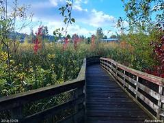 Totem Lake Wetland Trail