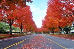 North Creek Parkway foliage 2019