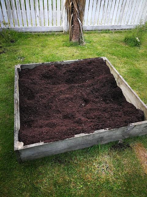 huakaroro taewa potato planting in Front lawn by shiny