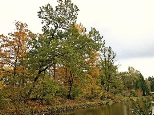 autumn Göltzschtal