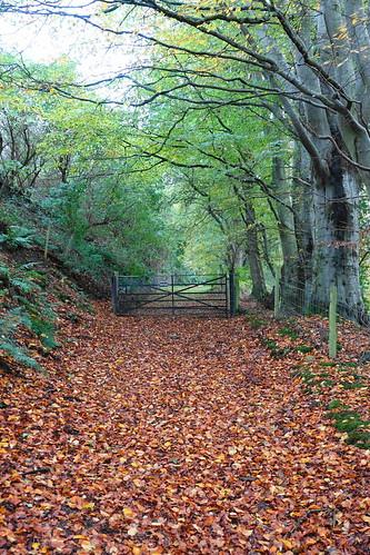 Autumn's golden path