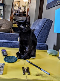 Helen is a writer's cat.