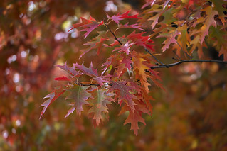 Autumn Meanderings