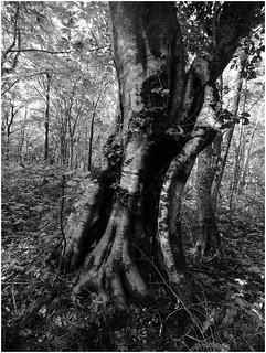 巨樹の森・中島台