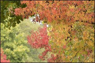 Fall 034 Surrey BC web