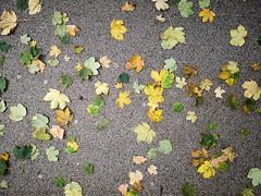 Abgefallene Blätter bedecken einen Pfad im Park