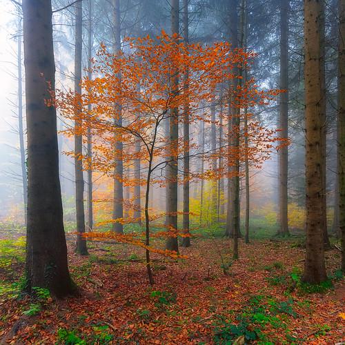 Üetliberg by fog