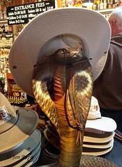 AZ NM Trip_002 Rattlesnake Museum (edit)