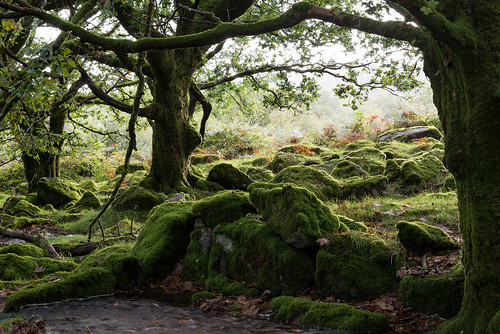 Mossy rocks and trees - NK2_8430