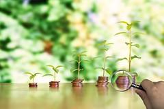 Geld mit Wachstum unter der Lupe