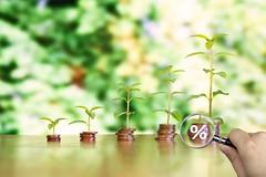 Geld mit Wachstum mit Lupe und Prozent