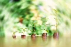 Geld mit Wachstum - radial