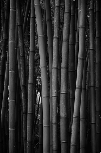 Bamboo cells