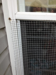 mesh on outside of window