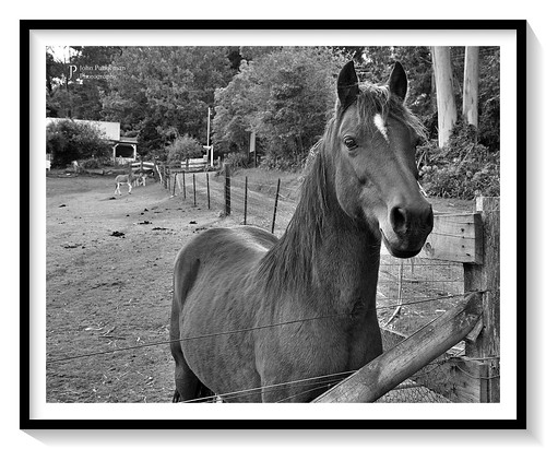 Horse four