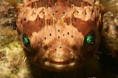 A Green-Eyed Monster...