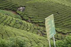 Munnar tea plantation and factory