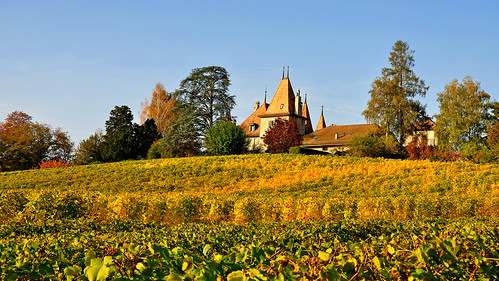 Château dans les vignes