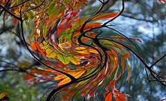 abstract autumn swirl