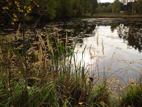 Teich bei Bücheloh