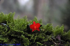flora do RS no habitat