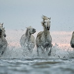 3rd PDI League 2 Open - White Horses by Colin Brister