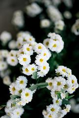 White flowers in the garden.