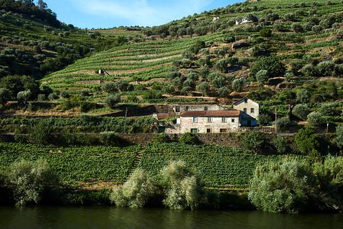 Douro River 8