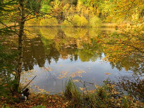 Teich am Wald