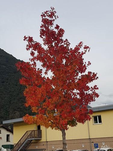 En tenue d'automne