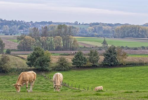 Vlaamse Ardennen - Nederbrakel2