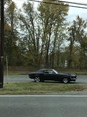 Mustang for sale in Aldie, VA