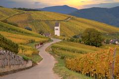 automne en Alsace