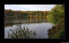 Au coeur de la forêt de Chantilly- Oise- France