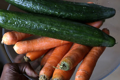 carrots + cucumbers for juicing