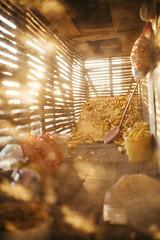 Interior of a corn barn