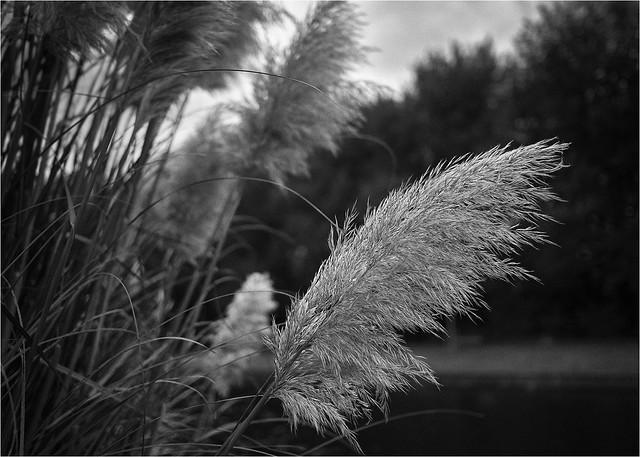 Reeds !