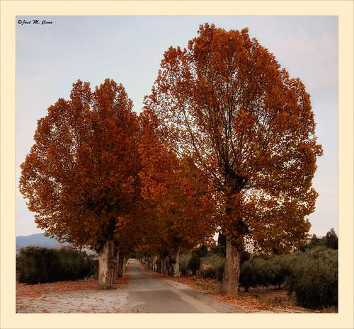 Colores de otoño (Armuña - Almería)