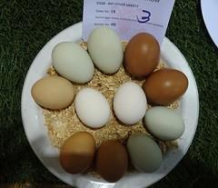 Egg Lovers' Treat