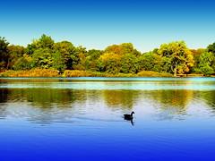 Lake at Sunny Day